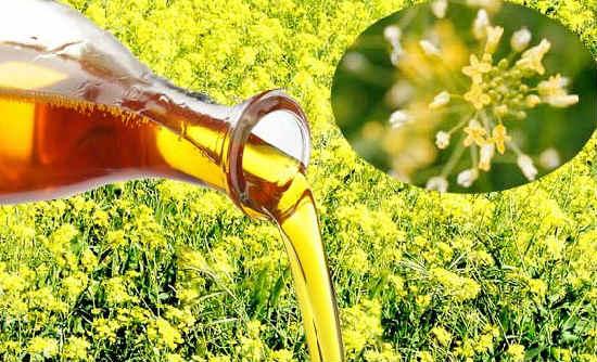 Ryzhikovoe maslo poleznye svojstva i protivopokazaniya1