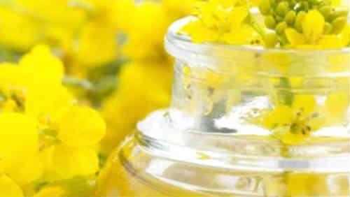 Ryzhikovoe maslo poleznye svojstva i protivopokazaniya3