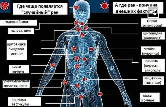 Mozhno li po analizu krovi opredelit' onkologiyu4